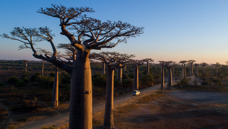 aller de baobab