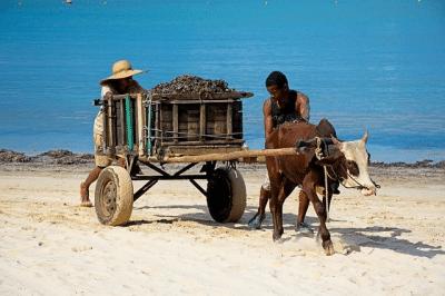 culture malgache